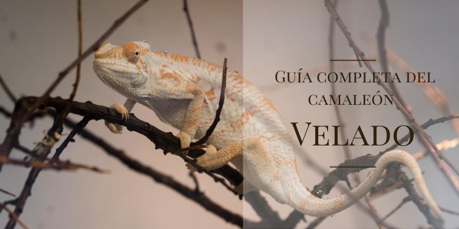 guía del camaleon pantera